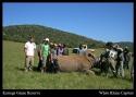 Rhino Relocating